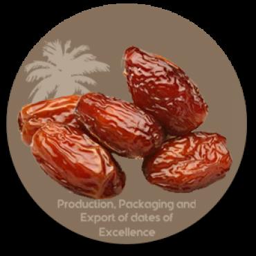 Processed Dates